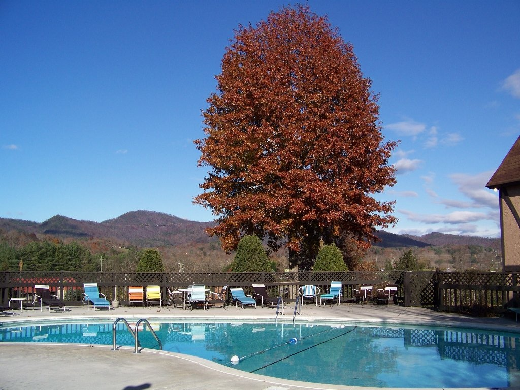 A tree with beautiful fall leaves near the swimming pool at the Highland Manor Inn in the Smoky Mountains.