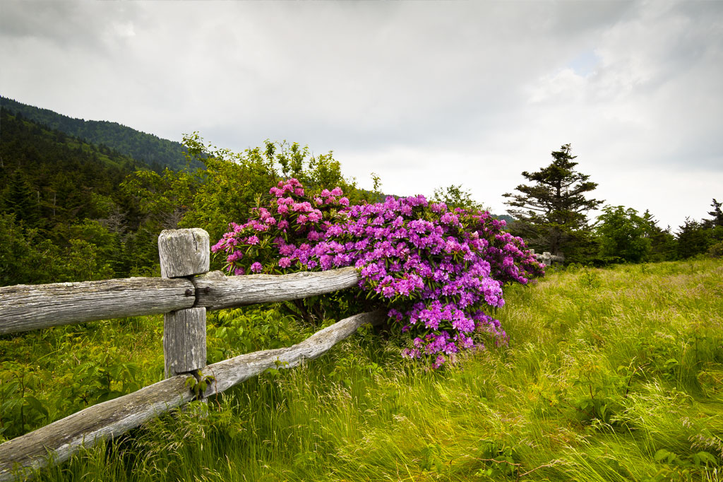 Beautiful wildflowers in the Smoky Mountains of Tennessee.