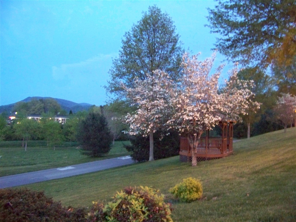 A blooming dogwood tree in front of the gazebo at the Highland Manor Inn.